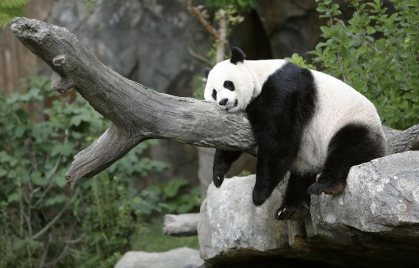 2012-09-17t130533z_01_tor901_rtridsp_3_usa-panda-washington-218