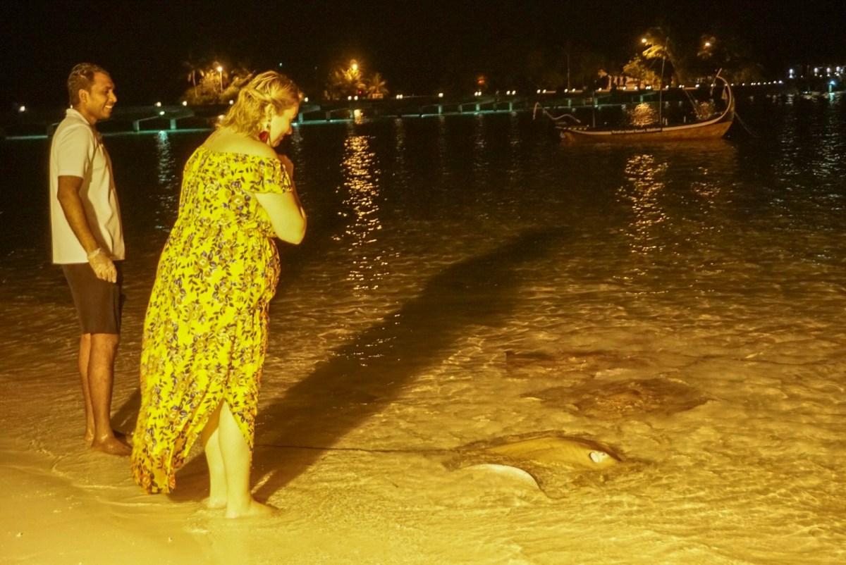 marine life in maldives