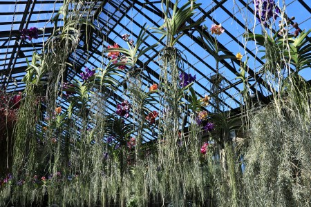 Orchid Extravaganza, Longwood Gardens