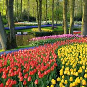 Keukenhof Gardens open till May 18th