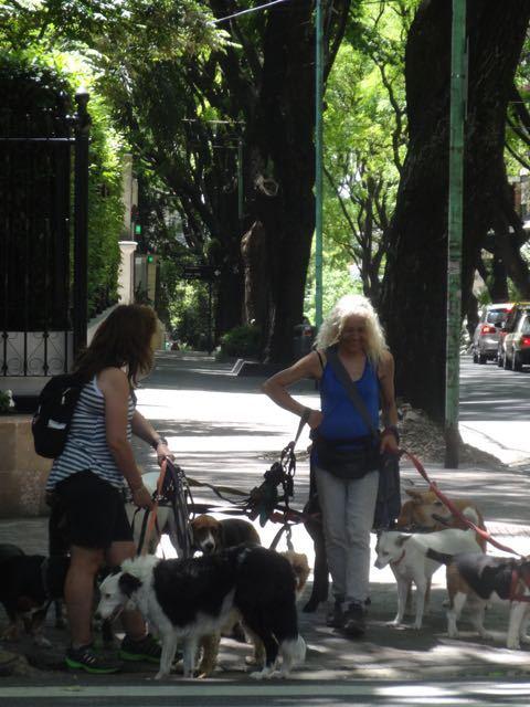 Hunde-Sitting