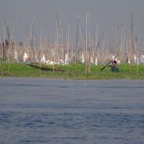 Landwirtschaft auf See