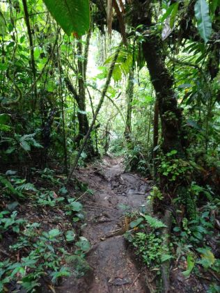 Regenwald in Boquete