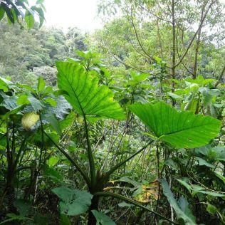 Regenwald bis zum Horizont