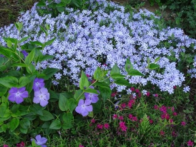 prachtvoll im Vorgarten
