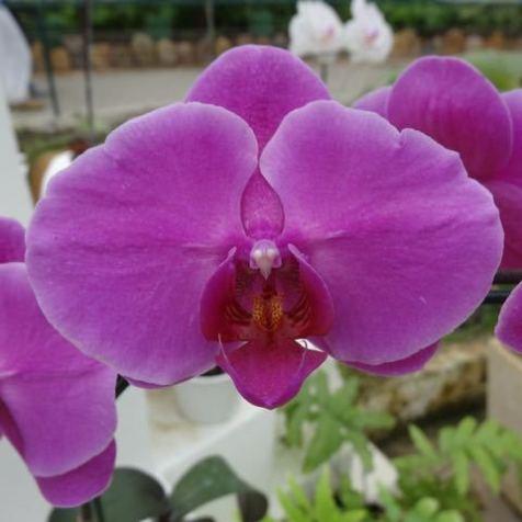 Brasilianische Blumen