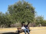 Schatten unter Oliven