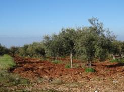 Felder auf Sizilien