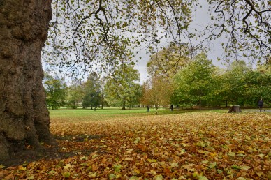 Herbstlaub in London