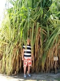 unter Bambus