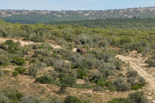 Der Addo Elephant National Park und seine Elefanten