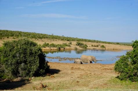 Elefanten-Baby im Addo Elephant National Park