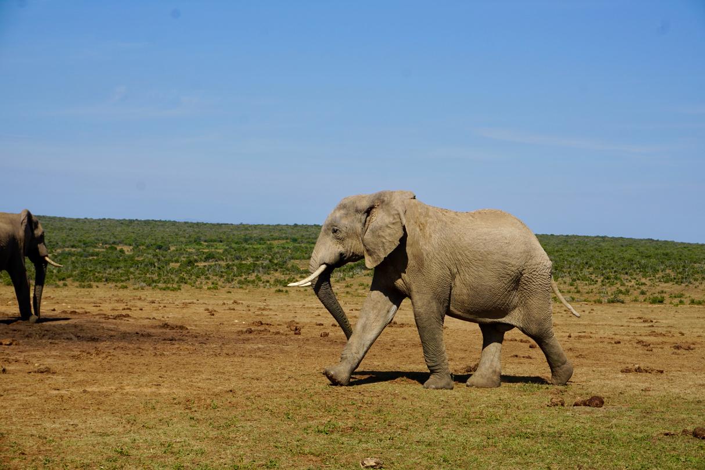 Addo National Park mit Elefanten