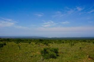 Weiden in Südafrika