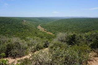 Wälder im Addo Elephant National Park