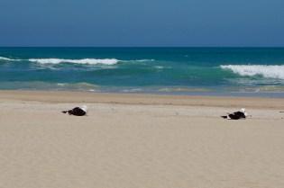 Sand und Möwen im Sonnenschein