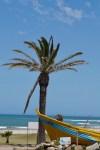 Palme in Südafrika
