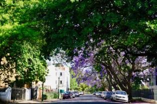 Grüne Allee in Südafrika
