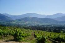 Weinreben, Sonne und Berge