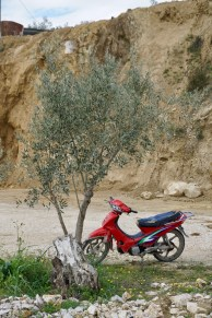 Motorrad-Parkplatz am Olivenbaum