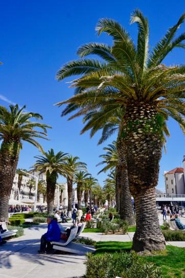 Schattenspendende Palmen