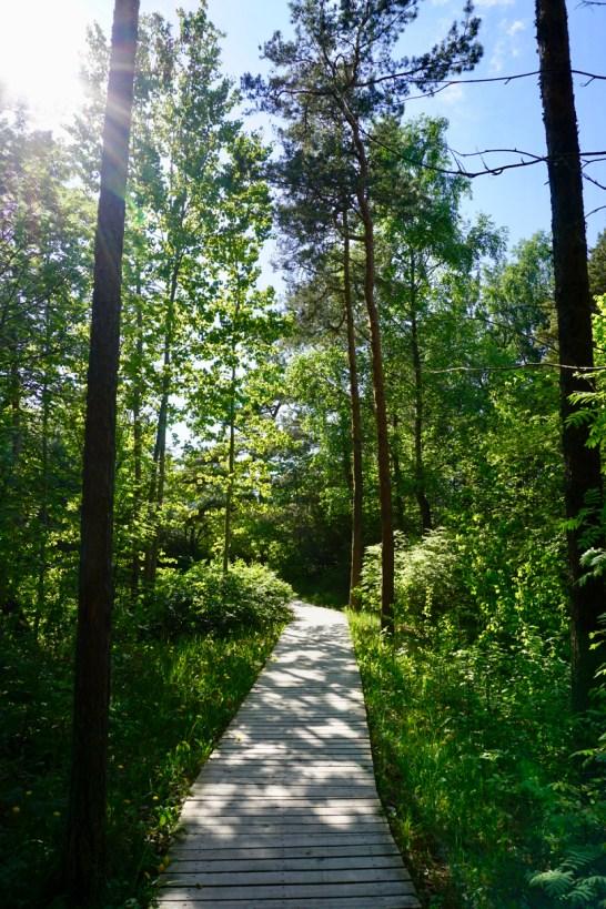 Grüner Wald an der Ostsee