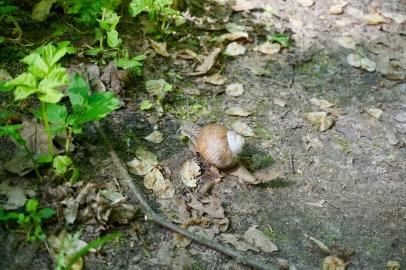 Schnecke im Wald