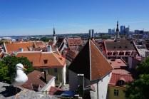 Möwe blickt auf Tallinn