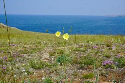 Wildblumen in Sibirien
