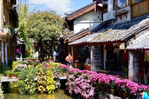 Blumen in Altstadt