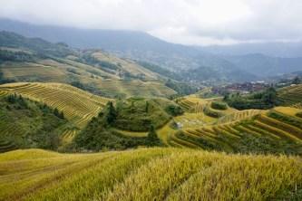 Tongji-Reisterrassen in China