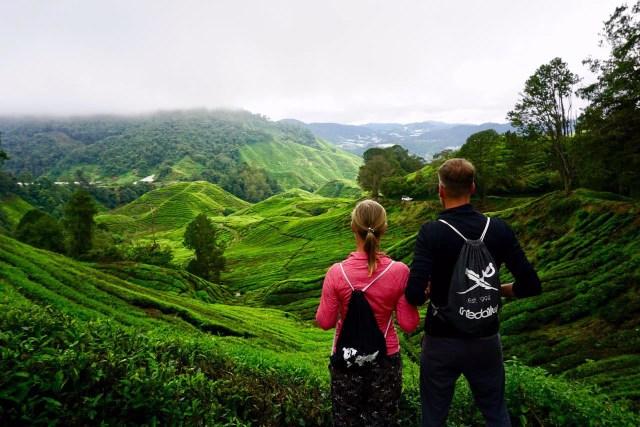 Weitläufige Teegärten in Malaysia
