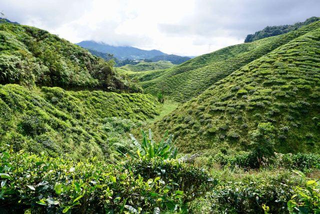 Wanderweg zum Gunung Jasar