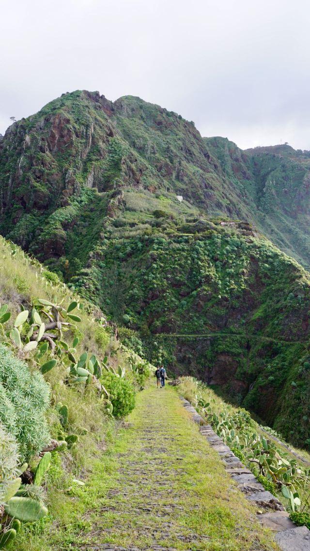 Pferdeweg auf Madeira