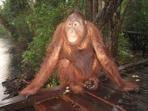 2009-11_bali-kumai-singapore_162.JPG