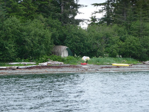 2014-07-07_usa_alaska_pws_squire-island_whale-camp1.JPG