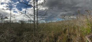 1st National Park of the year... Everglades