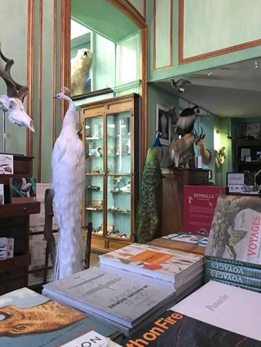 El interior de la tienda naturalista Deyrolle en París
