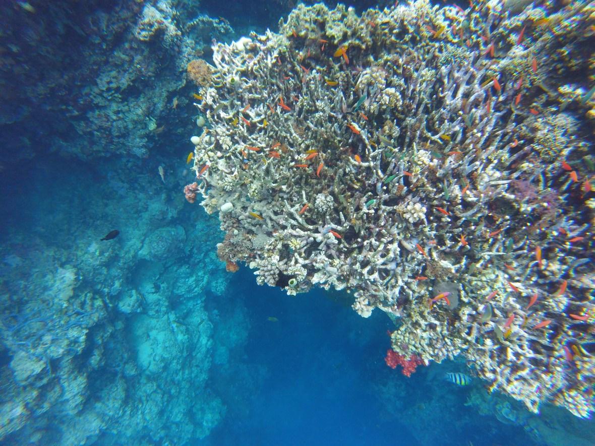 Plongée poissons et coraux à Bali