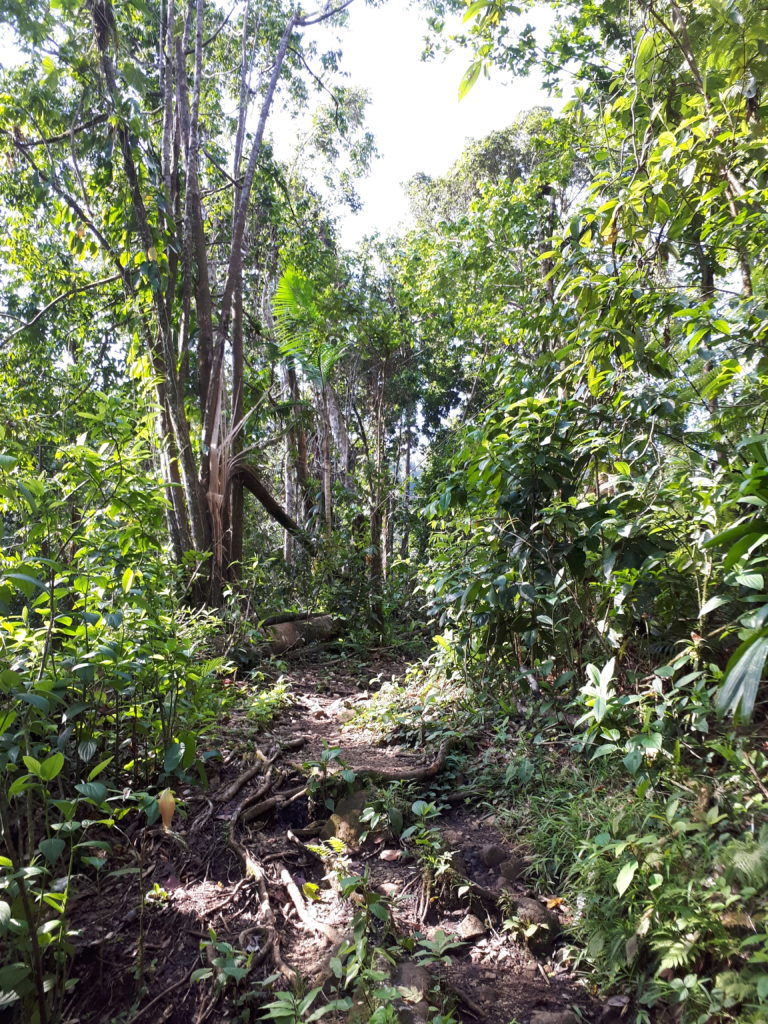 Sentier jungle guadeloupe