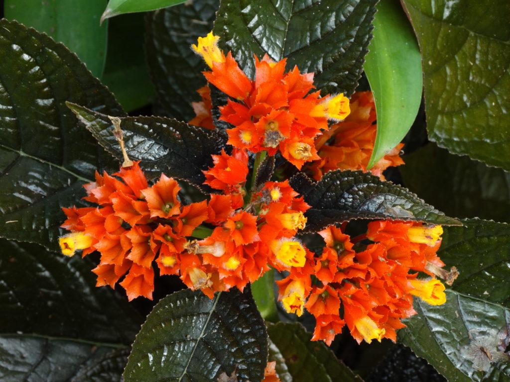 petites fleurs orange