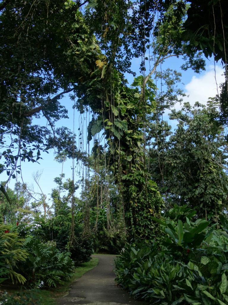 lianes jardin botanique