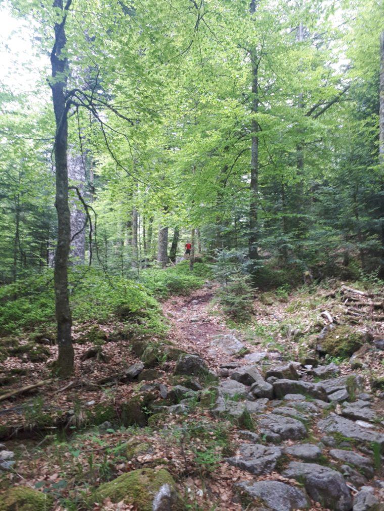 Sentier pédestre Vosges