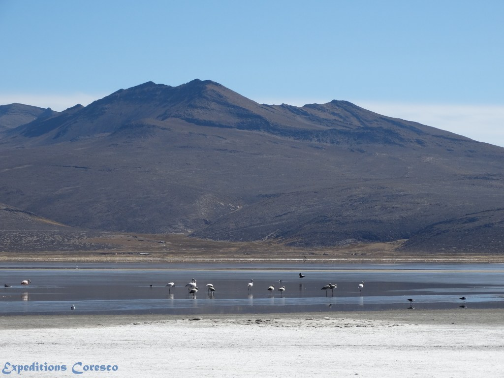 Flamants roses sur le lac