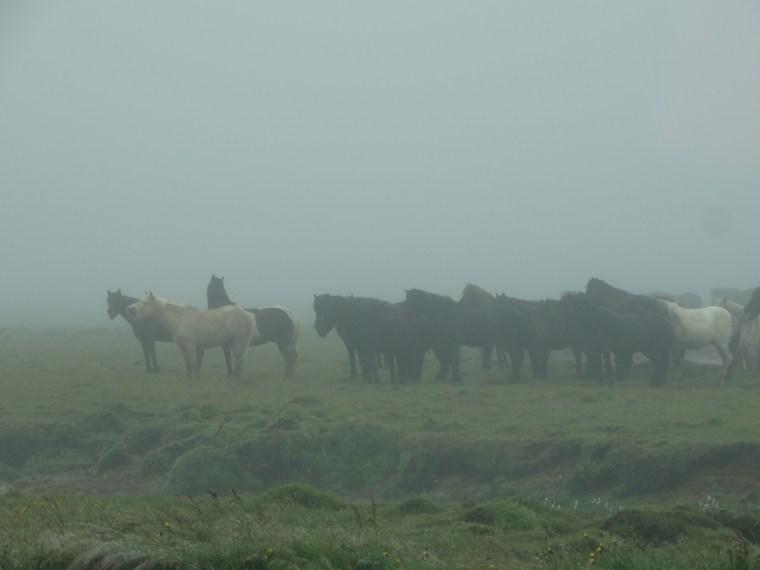 La brume islandaise