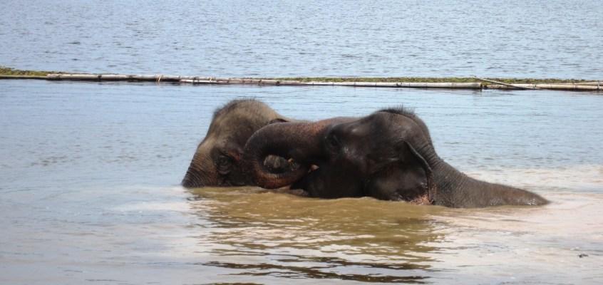 Elephant Conservation Center – Laos