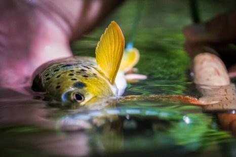 Beautiful fin