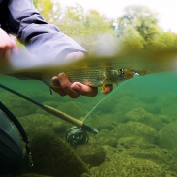 Fly Fishing for Grayling in Switzerland