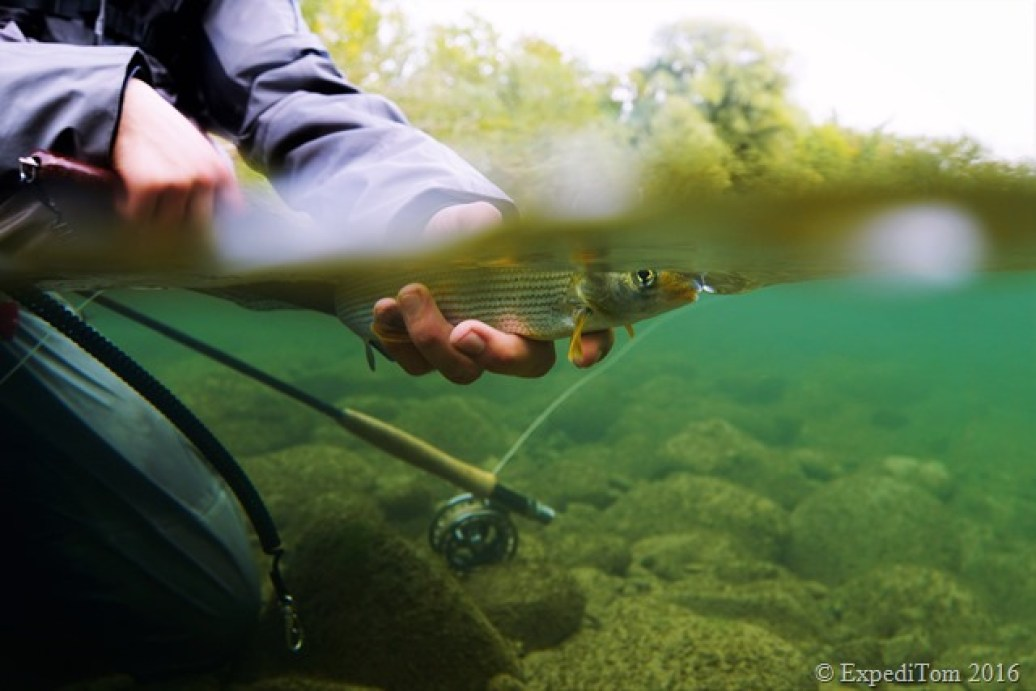 Fly fishing for grayling in Switzerland underwater shot