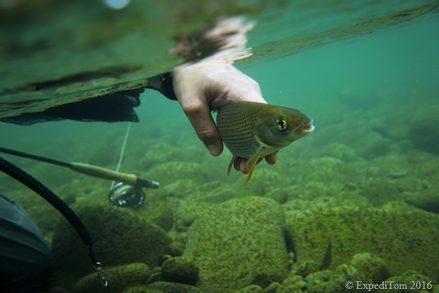 Fly Fishing for Grayling in Switzerland8